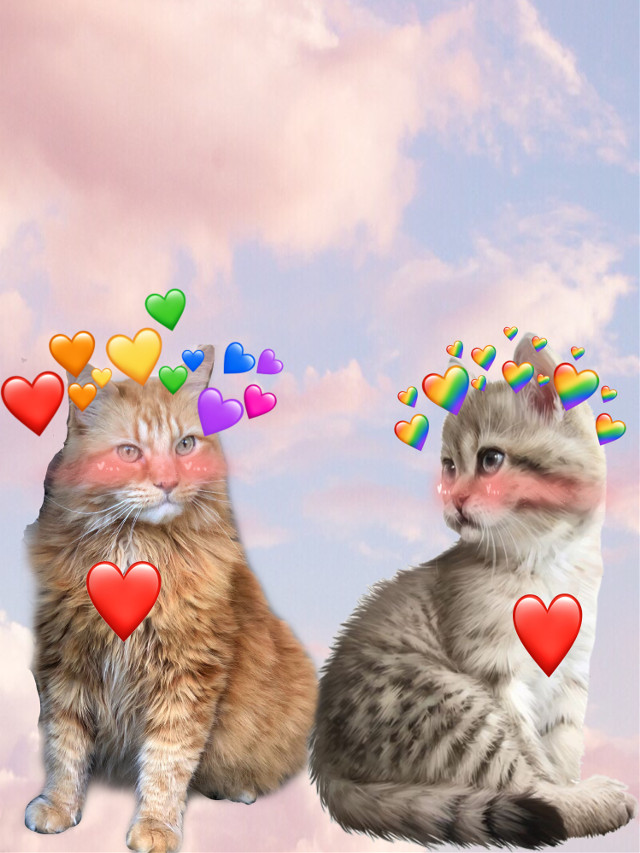 #cat_love