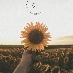 sunflower wallpaper lockscreen autumn quote sun moon freetoedit