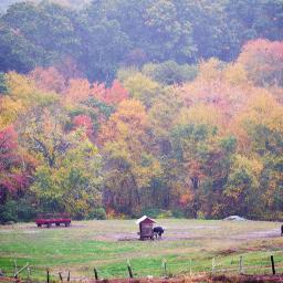 outdoorphotography naturephotography countryside smallfarm autumnvibes rainyday freetoedit