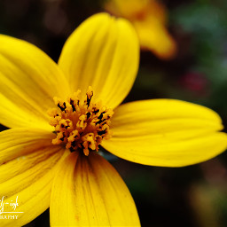 freetoedit photography flower macro nature