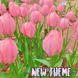 newtheme freetoedit