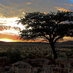 naturephotography nature tree southafrica africa