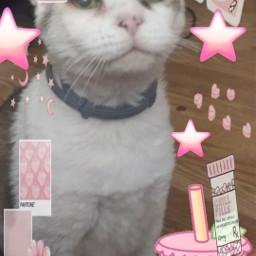 2🌸  best edit cat kitty kitten tabby tabbycat pink pinkedit pinkcat pinkkitty pinkkitten pinkcatedit pinkkittyedit pinkkittenedit housecat cute cutiepie pinkflowers pinkstars pinkhearts mycat old oldcat seniorcat freetoedit