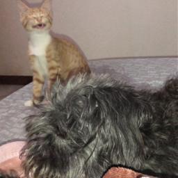tito tarja cat dog picsart desafio animals pcmypetsbestportrait mypetsbestportrait