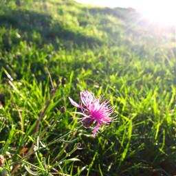 pinkflower autumn