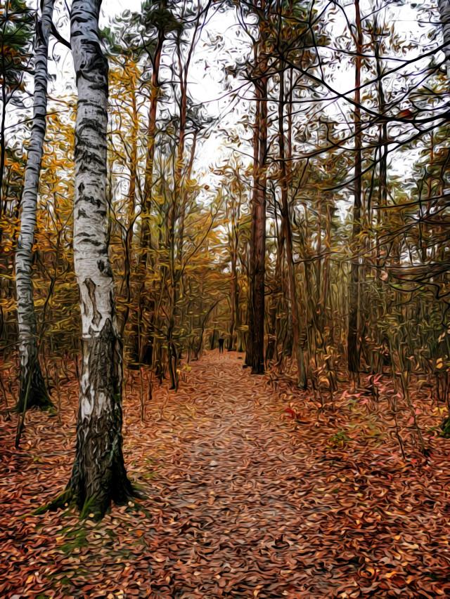 #autumn #autumnvibes #fall #forest #fallcolors #woodland #trees #road #forestroad #leafs #myphoto #myclick #myedit #artistic #oilpaintingeffect #HeyPicsArt #picsartmaster #picsartmastercontributor