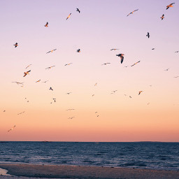 naturephotography atlanticocean goldenhour seagullinflight freetoedit
