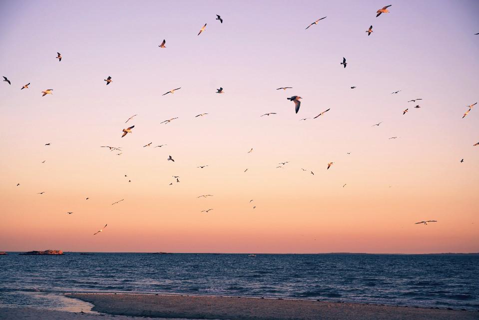 #naturephotography #atlanticocean #goldenhour #seagullinflight