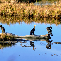 outdoorphotography animalphotography swamp birds grass reflections freetoedit