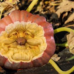 freetoedit pumpkin carving farm halloween