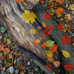autumm srcautumnleaves autumnleaves freetoedit