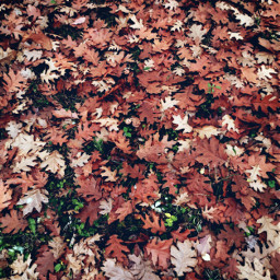 leafs autumnvibes autumn fall forest fallcolors myphoto nature beautifulday beautifulnature heypicsart freetoedit