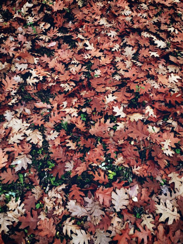 #leafs #autumnvibes #autumn #fall #forest #fallcolors #myphoto #nature #beautifulday #beautifulnature #HeyPicsArt
