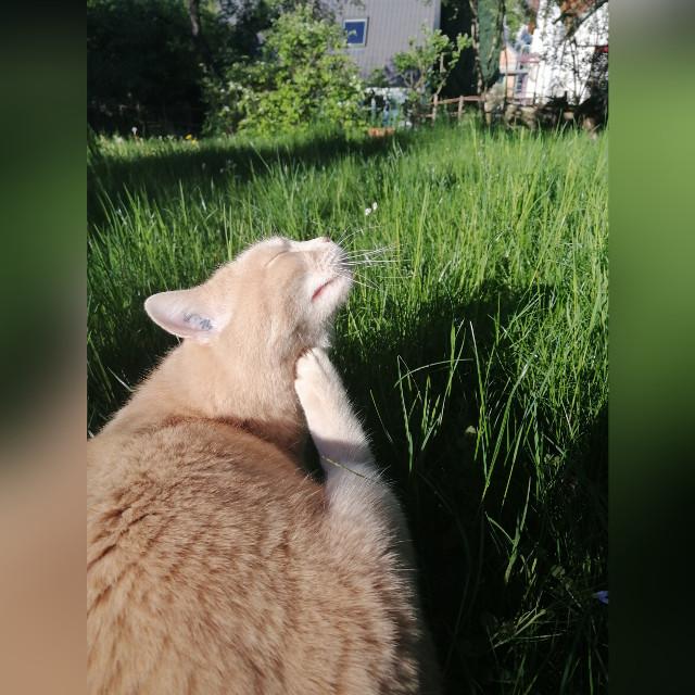 #sandy#scratches#brautiful#cute#adorable#green#grass#grassfield