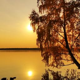 sunset tree autumn reflection vividcolor hdr naturephotography