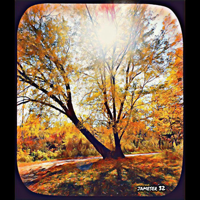 #photography #colorful #full #sun #sunny #sunlight #tree #lleafs #pretty