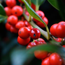freetoedit kinora red berries mygarden