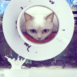 freetoedit milk cat cup wallpaper ircacupoftea