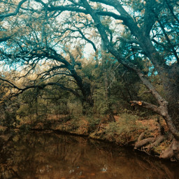 creek trees water autumn autumncolors