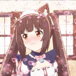 nekopara chocola nekoparachocola nekoparaedit chocolaedit anime animegirl animeedit animeicon freetoedit
