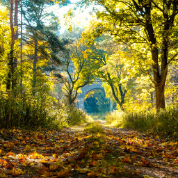 freetoedit forest road myphoto nature autumn