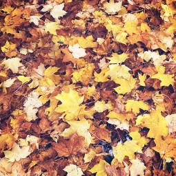 autumn autumnflatlay