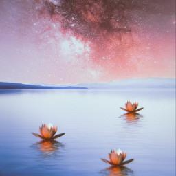 waterrose waterroses water galaxy stars freetoedit