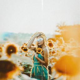 replay sunflowers🌻💛🌻 freetoedit sunflowers