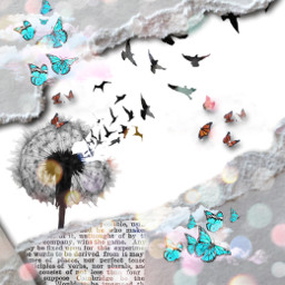 dandelionseeds butterflyeffect rippedpaper newspaperedit rcrippedpaperaesthetic rippedpaperaesthetic freetoedit