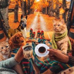 caravan digs cats couple cofee ircacupoftea freetoedit