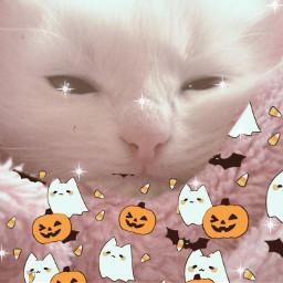cutecat cute cat picsart picsartisthebest lovepicsart lovecats freetoedit