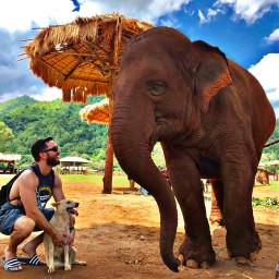 bestpetportraitchallenge myson elephant dog adeventure pcmypetsbestportrait
