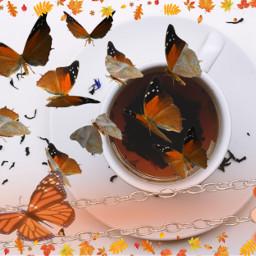 tea spillthetea butterfly autumn brown ircacupoftea acupoftea freetoedit
