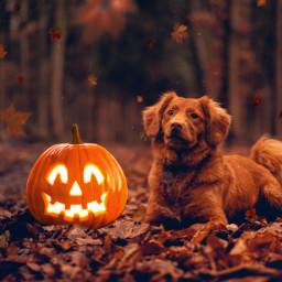 freetoedit dog nature halloween october day