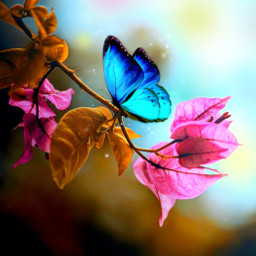 landscape inspiration nature fantasy madewithpicsart emitions myedit butterfly trinitarian freetoedit