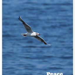 peace freedom freetoedit