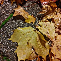 fall leaf nature yellow autumn autumncolors raindrops