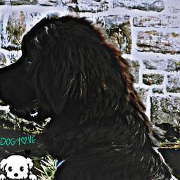 mydog doglove mypuppy freetoedit
