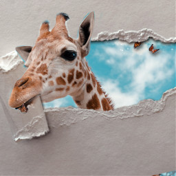 giraffe freetoedit rcrippedpaperaesthetic rippedpaperaesthetic