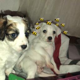 petlover pets desafio freetoedit srcbethequeenbee bethequeenbee