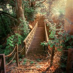 freetoedit bridge stairs myphoto nature