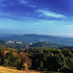 nature tree hill hillside panorama