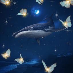 whale sky moon butterfies stars fantasy fantasyart freetoedit
