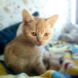 cat cats kitty kittys picsart replay lovecat🐱🐈 lovecat💋😻 friends friend lovecat