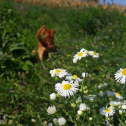mydog🐶 photoofsumer mydog