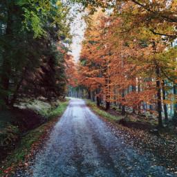 road dirtroad forestroad forest autumnvibes fall autumn autumncolors dusk myphoto myclick heypicsart picsartmaster picsartmastercontributor freetoedit