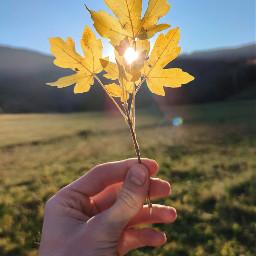 autumn photography nature orange freetoedit