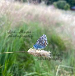 nature naturephotography natureaesthetic butterfly butterflyaesthetic wildlife