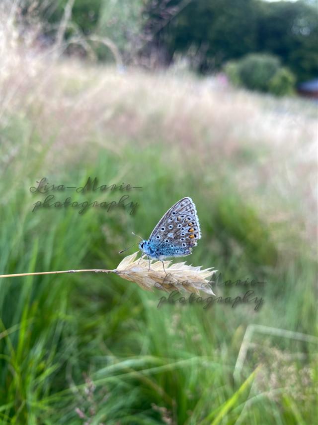 @mrsorriso1747 #nature #naturephotography #natureaesthetic #butterfly #butterflyaesthetic #wildlife
