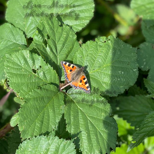 @mrsorriso1747 #nature #naturephotography #natureaesthetic #photography #butterfly #butterflyaesthetic #aestheticnature